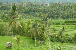 Bali avec des bébés