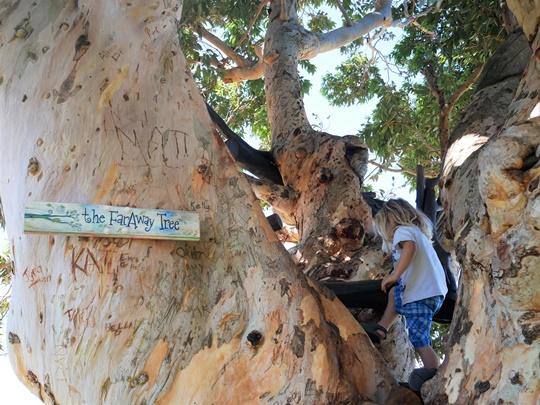 grimper aux arbres - trip and twins