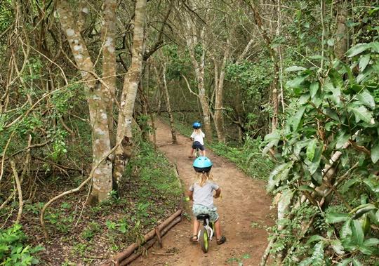 rocktail camp - wilderness safari - trip and twins
